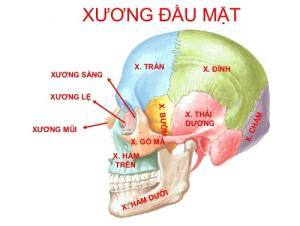 Coi vận mệnh con người qua xương đầu mặt