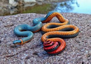 Giấc mơ về rắn ẩn chứa rất nhiều điều phức tạp
