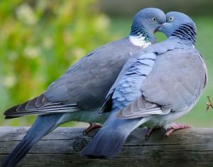 Giải mã giấc mơ về các loài chim (P1)