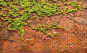 Mơ thấy bức tường có đáng sợ không?