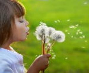 Điềm báo giấc mơ về những cánh hoa bồ công anh