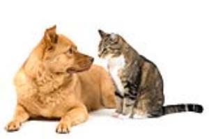 Mơ thấy chó có sang, mơ thấy mèo có khó?