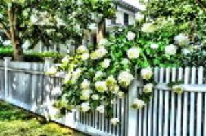 Cách sử dụng hàng rào có giá trị thẩm mĩ và phong thủy