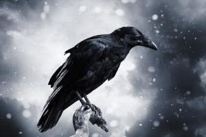 Giải mã giấc mơ: Mơ thấy quạ, diều hâu, kền kền và một số loại chim khác