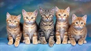 Mơ thấy Mèo là điềm LÀNH hay DỮ?