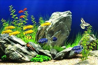 Mệnh Thủy nuôi cá gì? Đọc ngay để áp dụng chuẩn không cần chỉnh cho nhà mình!