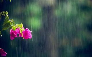 Dự báo thời tiết hôm nay 31/8: Sài Gòn mưa về chiều tối