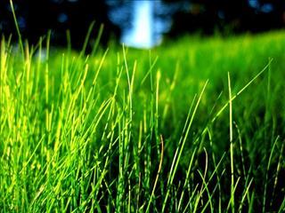 Khám giá giấc mơ về cỏ
