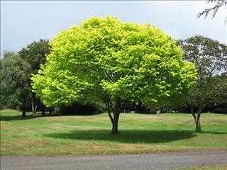 Thấy một cái cây trong giấc mơ là điềm gì?