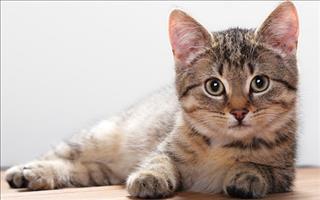 Giải mã giấc mơ thấy mèo mang lại điều không may