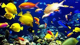 Khám phá giấc mơ về thủy hải sản