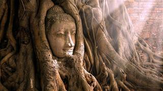 """Ngắm nhìn vẻ thánh thiện và siêu thoát của """"Kiệt tác Phật giáo"""": Tượng mặt Phật trong cây"""