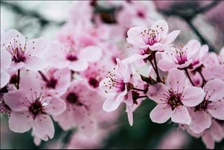 Tử vi thứ 3 ngày 2/4/2019 của 12 cung hoàng đạo: Song Tử đào hoa, Nhân Mã trưởng thành