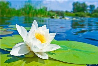 Những ai sinh vào ngày này Âm Lịch năm 2019 phúc đức như hoa như ngọc