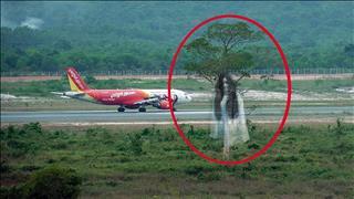 """""""Cây ma"""" ở sân bay Phú Quốc: Chuyện huyền bí về oan hồn cô gái trẻ"""