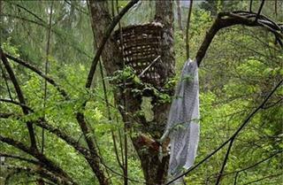 """""""Rừng ma đồng nhi"""" - Nơi xác những đứa trẻ treo lủng lẳng trên cây"""