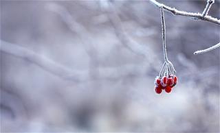 Dự báo thời tiết 10 ngày tới (3/12 – 13/12/2020): Bắc Bộ rét sâu, Trung Bộ mưa dông