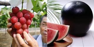 """Top hoa quả đắt đỏ nhất thế giới, giá """"cắt cổ"""" nhưng giới nhà giàu vẫn cứ săn lùng"""