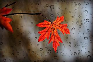 Dự báo thời tiết 10 ngày tới (24/9 – 4/10/2020): Cả nước tiếp tục có mưa dông