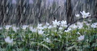Dự báo thời tiết ngày 27/10/2021: TPHCM mưa dông, Hà Nội ngày nắng