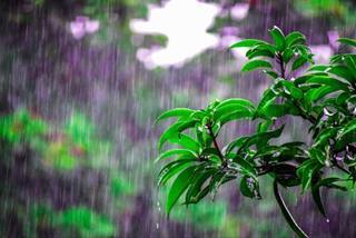 Dự báo thời tiết ngày 13/6/2021: Hà Nội mưa to đến rất to, có lúc có dông
