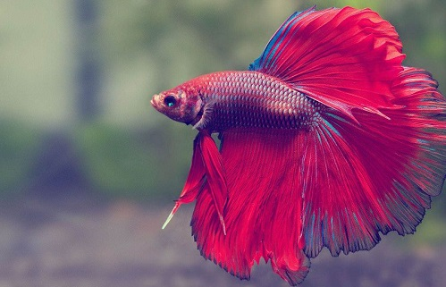 Image result for nằm mơ thấy cá