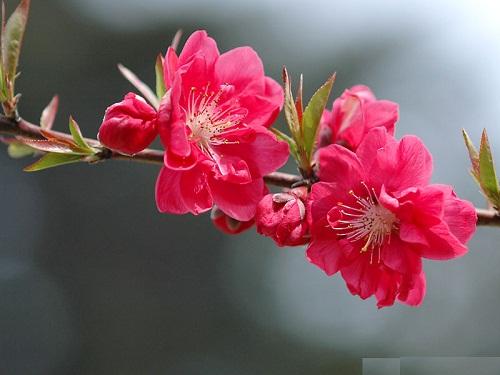 Luu y cach choi hoa ngay Tet Binh Than de ruoc loc vao nha hinh anh