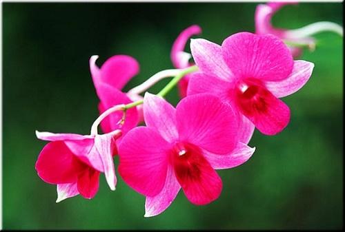 Y nghia phong thuy cua cac loai hoa hinh anh 4