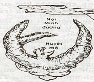 The nao la Trung minh duong hinh anh