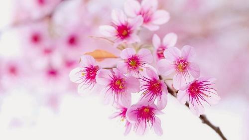 Menh Dao hoa mang den may man trong hon nhan hinh anh
