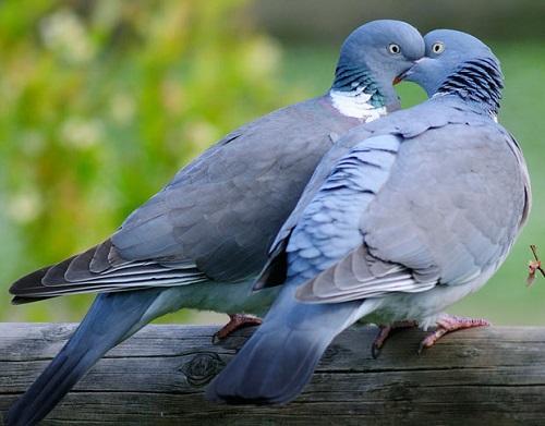 Giai ma giac mo ve cac loai chim (P1) hinh anh