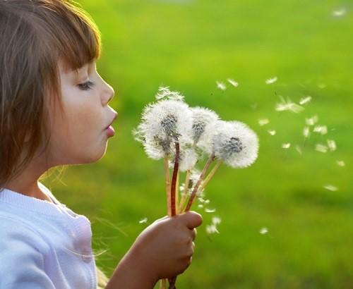 Diem bao giac mo ve nhung canh hoa bo cong anh hinh anh