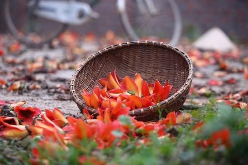 4 sac hoa sang bung tiet Xuan Phan hinh anh 2