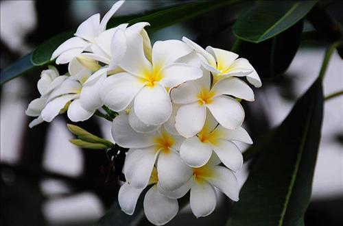 7 loài hoa tránh dâng lên bàn thờ sẽ mất hết Phúc Lộc