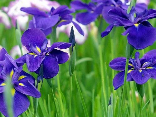 Loai hoa bieu trung cua 12 con giap hinh anh