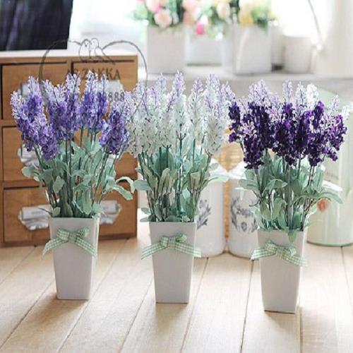 hoa gia dao hoa gia