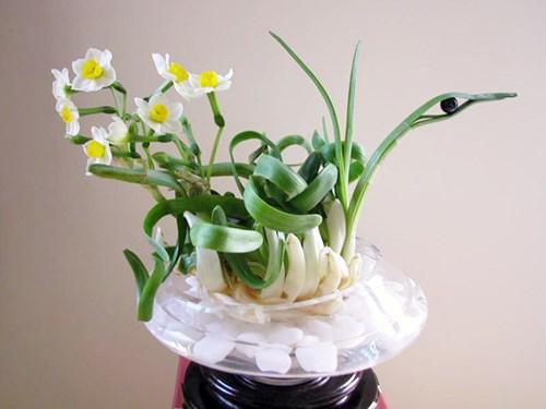 tac dung phong thuy cua hoa thuy tien