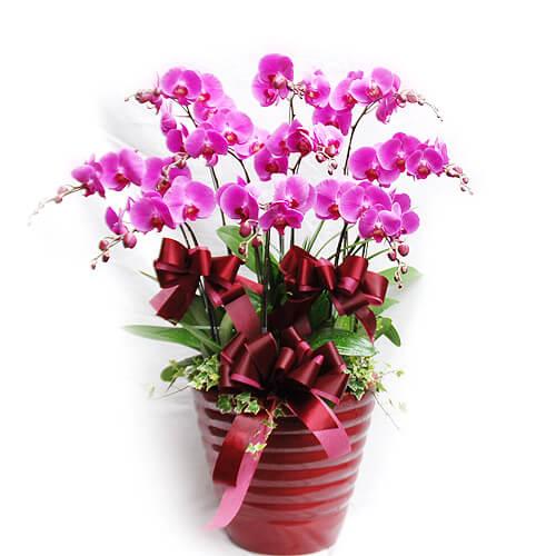 tac dung phong thuy cua hoa lan