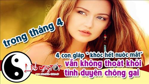 4 con giap Khoc het nuoc mat ma van khong thoat khoi duong tinh chong gai trong thang 4 hinh anh