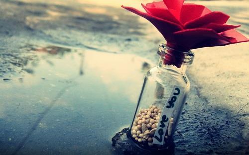 dao hoa no ro