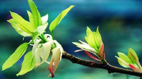 Dầu năm hái lộc cây gì dể cả năm may mắn