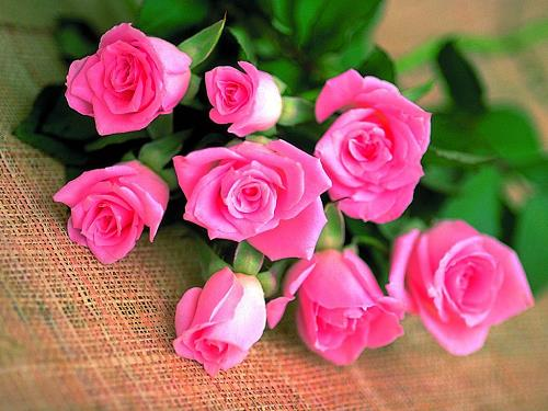 cam binh hoa