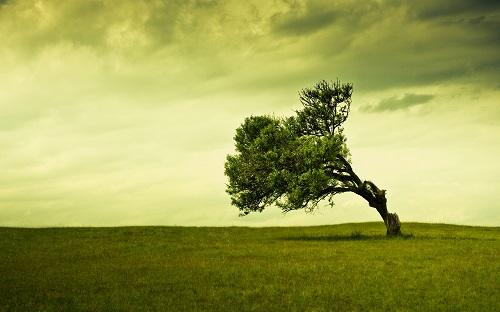 Học 5 đức tính từ cây cổ thụ để làm việc gì cũng thành công viên mãn