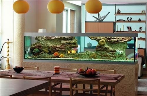 Mệnh Mộc nuôi cá gì để thần may mắn thường xuyên ghé thăm