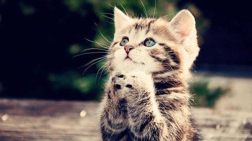 Mơ thấy mèo dánh con gì