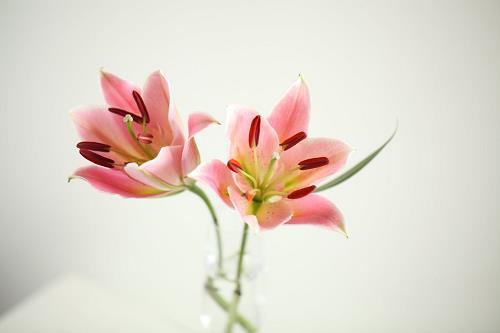 Tử vi thứ 3 ngày 11/9/2018 của 12 cung hoàng đạo:Cự Giải tài hoa, Sư Tử chán nản