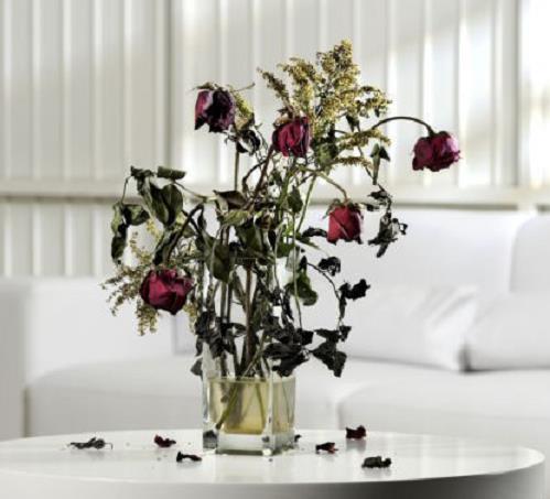 Kieng ky phong thuy dat hoa kho heo trong nha