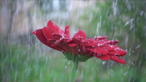 Dự báo thời tiết 3 ngày tới 19-21/10: Lượng mưa giảm dần ở Trung Bộ, Bắc Bộ lạnh về đêm và sáng