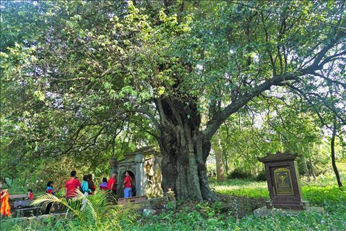 Chuyện ma mị ở Miếu Cây Thị 544 tuổi cực thiêng nơi đất Huế