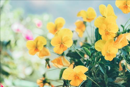 TIN TỨC TỔNG HỢP ngày 16/3/2019: Ngày Hoàng đạo giúp tuổi Dậu tài lộc vượng